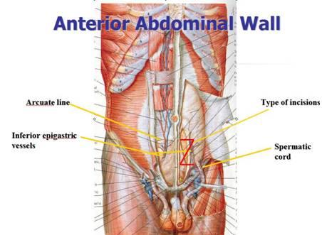 Bowel Wall Anatomy 6974849 Follow4morefo